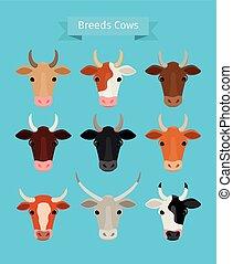 vector, Conjunto, Cabezas, vaca