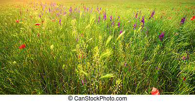 Texture of spring meadow - Texture of spring flower meadow...