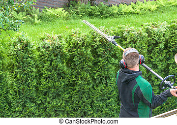 Hedge cutting petrol hedge trimmer. - Hedge trimming, works...