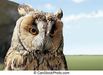 Small Owl - The Boreal Owl. In Europe, it is typically known...
