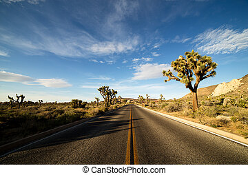 Desert Road with Joshua Trees in the Joshua Tree National...