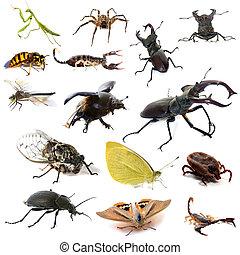 Insetos, e, escorpiões,