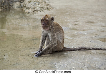 wild monkey sitting on sea beach and feeding