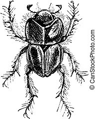 Earth-boring Dung Beetle or Lethrus spp Lethrus is one genus...