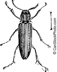 False Click Beetles or Eucnemidae. Eucnemidae is a family...