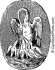 Pelican, vintage engraving - Pelican, vintage engraved...