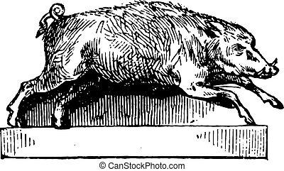 Boar, vintage engraving.