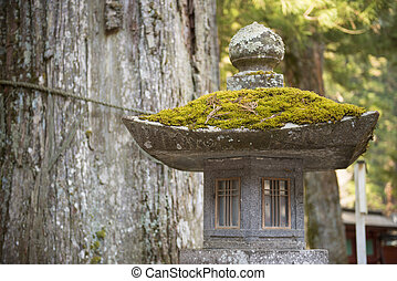 green moss on stone pillar, nature