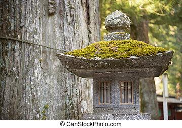 green moss on stone pillar, nature