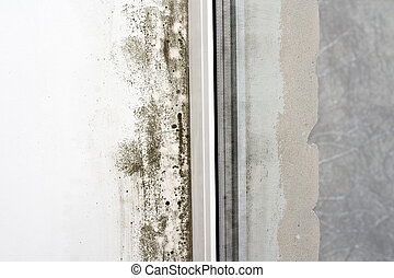 Mold on the wall - The damp is attacking the wall at a...