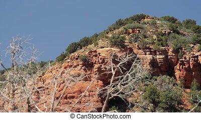 rotes, steinen, an, Seite, Federn, Wüste, Arizona, USA
