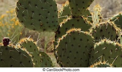 Cactus in Page Springs Desert, Arizona, USA - Graded and...