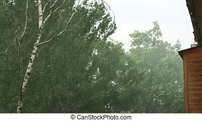 Storm in forest, cats and dogs - Strong wind and rain in...