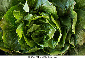 Organic Collard Greens - Bunch of collard green leaves in...