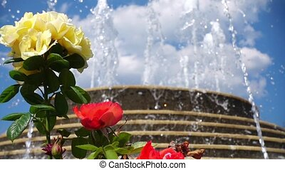 Fountain and Beautiful Roses