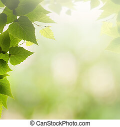 Afternoon haze, abstract summer backgrounds with green leaves and sun beam