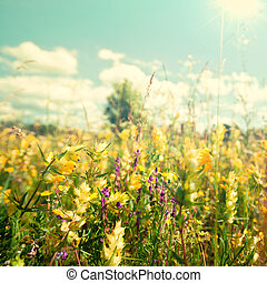 Beauty abstract summer backgrounds with wild flowers under bright sun