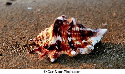 Shell on beach