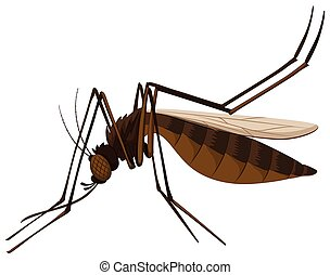Brown mosquito on white background