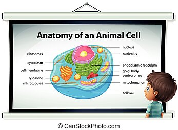 Chart showing anatomy of animal cell illustration