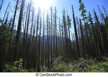 coniferous forest - summer day in coniferous forest ....