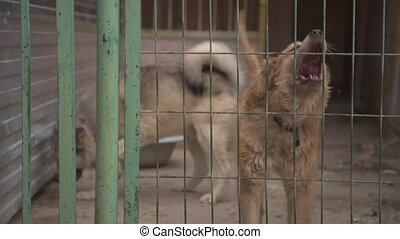 Dogs in pet shelter barking