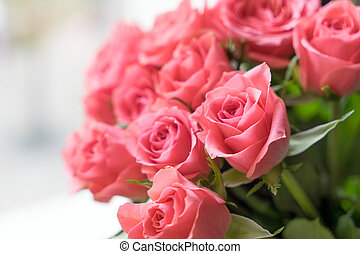 pink Roses - pink roses over a bright background