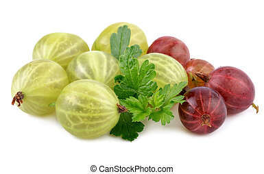 red green gooseberry fruit with leaf on white