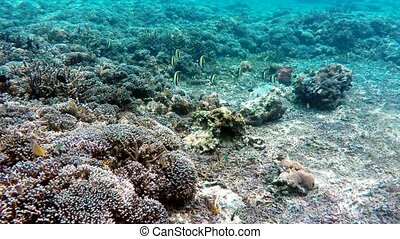 Diving in indian ocean, Indonesia, underwater landscape,...