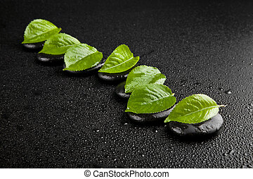 black stone with green leaves in drops of water isolated on...