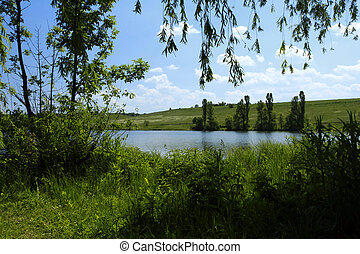 Forest lake in summer under the blue sky