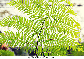 green fern frond - botany, nature, biology and flora concept...