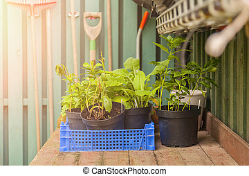 Potting table - Image of a potting table with plants and...