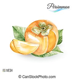 Persimmon - Hand-Drawn Watercolor Painting Persimmon on...