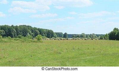 Cows graze in a pasture near the fo