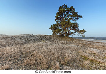 Mighty Pine Tree At Veluwe In Winter At Veluwe The...