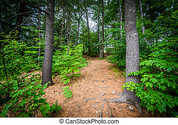 Trail at White Park, in Concord, New Hampshire