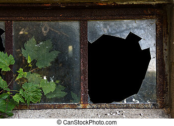 ivy in broken windowpane - Grape ivy growing in hole a...
