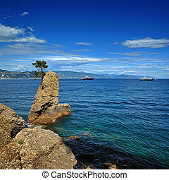 Lonely pine on the rock at mediterranean sea on Italian...