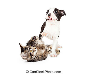 Playful Kitten and Puppy on White - Cute and playful kitten...
