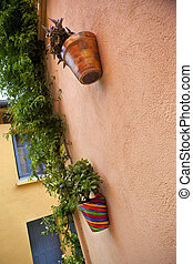 Potted plants against a wall - Two potted plants and Jasmine...