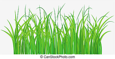 green grassy field - Vector illustration of Straight forward...