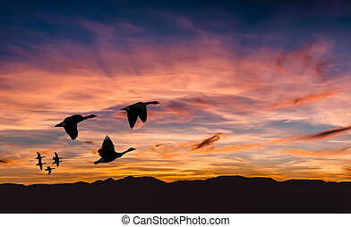 Beautiful landscape on sunset or sunrise with flying birds...
