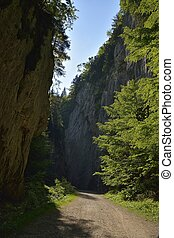 Road through gorge in Piatra Craiului National Park