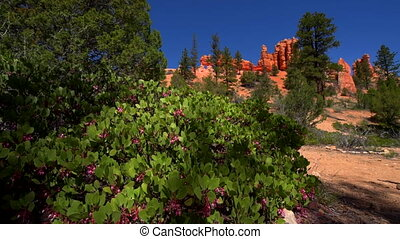 Fortress Rock Bryce Canyon - Fortress Rock Mossy Cave Trail...