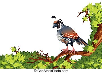 Quail standing on green branch illustration