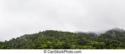 Amazing wild nature view of deep evergreen forest landscape...