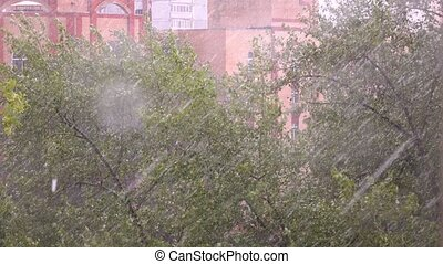 Heavy rain and stormy wind bending trees in residential area...