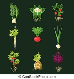 Fresh Vegetable Plants With Roots Collection In Realistic...