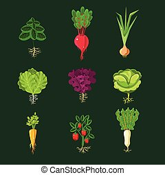 Fresh Vegetable Plants With Roots Set In Realistic Cartoon...